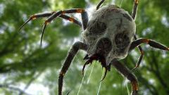 SpiderFamiliar.jpg
